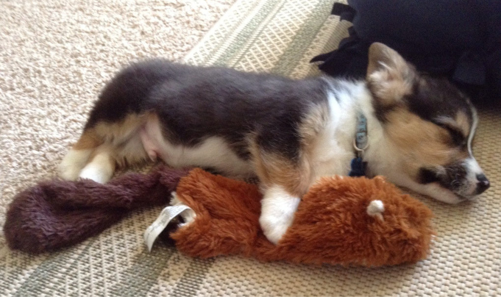first day home played his squeaky squirrel until passed out