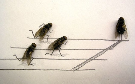 flies 1 - now this is fly