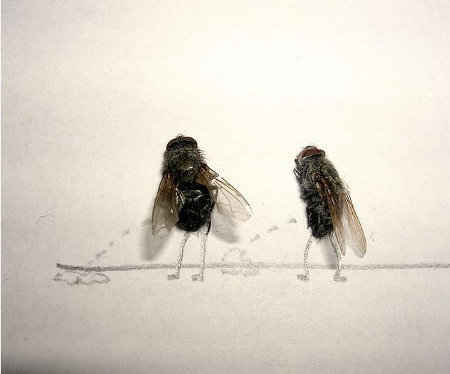 flies 2 - now this is fly