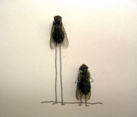 flies 3 - now this is fly