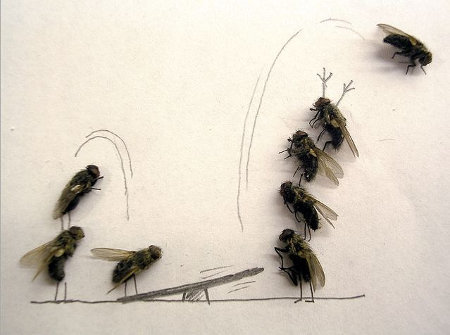 flies 7 - now this is fly