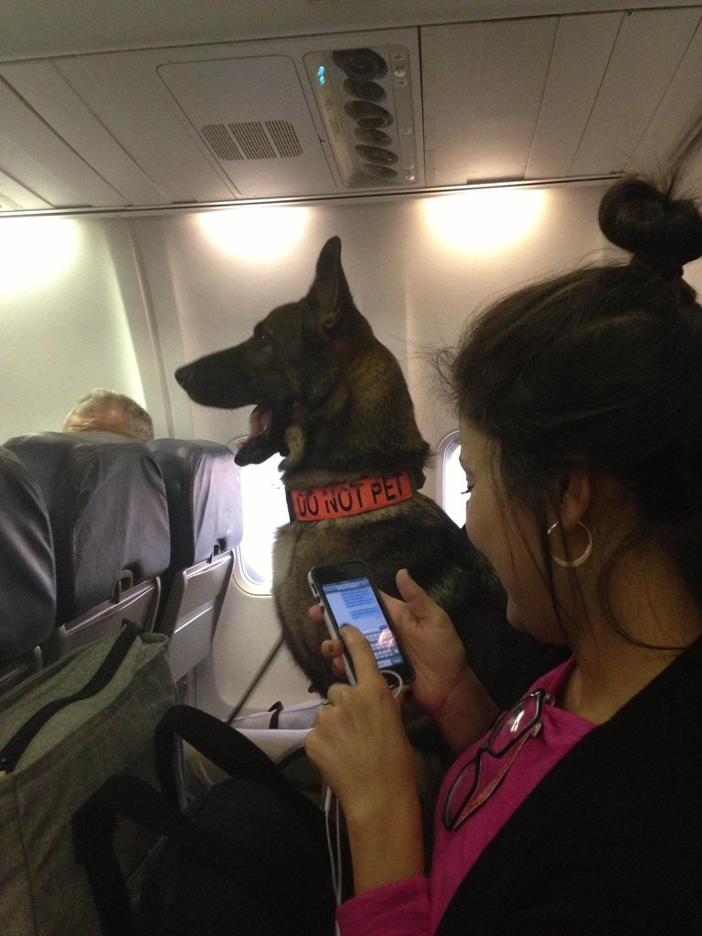 flight tonight sat two seats away from air force bomb dog