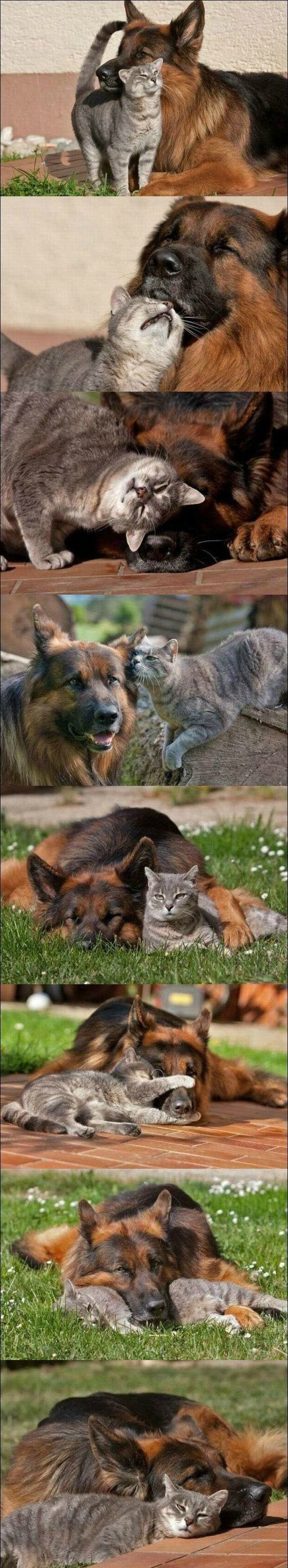 friends - awesome animals
