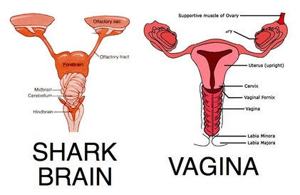 from now periods will known shark