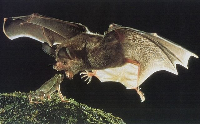 fticd - this is why i like bats