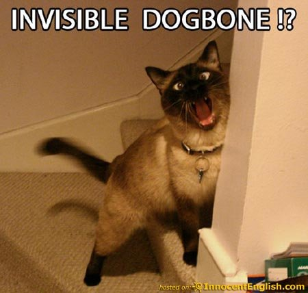 funny cat invisible dogbone