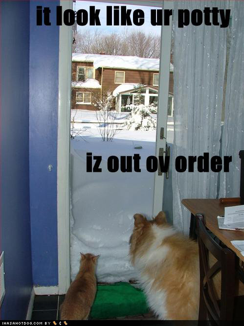 funny dog pictures cat dog look snow