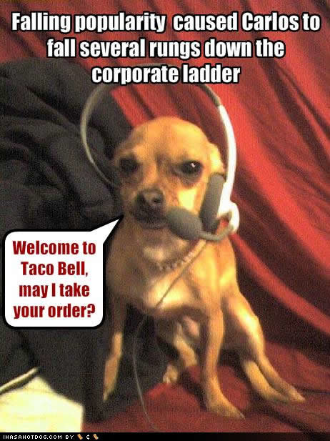 funny dog pictures corporate ladder