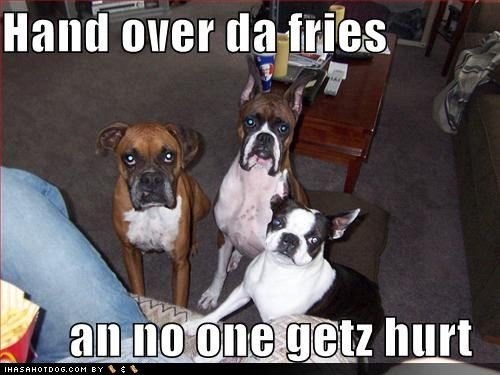 funny dog pictures dogs suggest hand fries