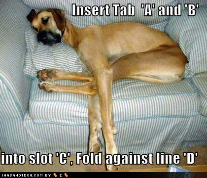 funny dog pictures fold dog couch directions