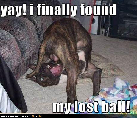 funny dog pictures found lost ball