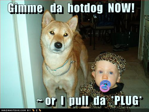 funny dog pictures gimme hotdog