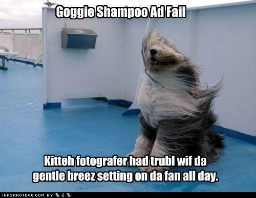funny dog pictures goggie shampoo fail
