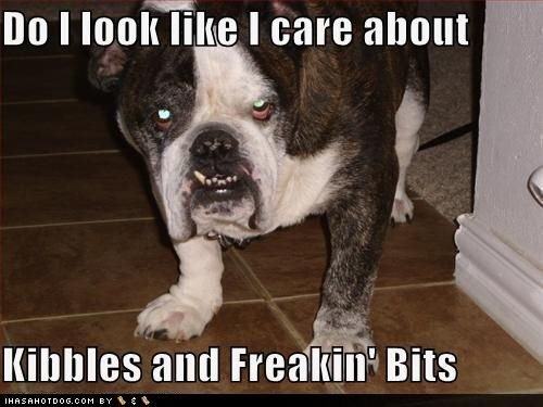 funny dog pictures look like