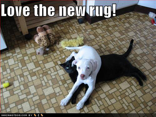 funny dog pictures black cat rug