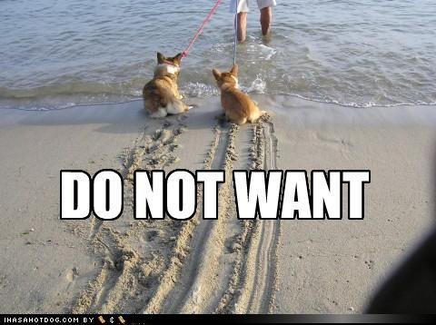 funny dog pictures not want dogs