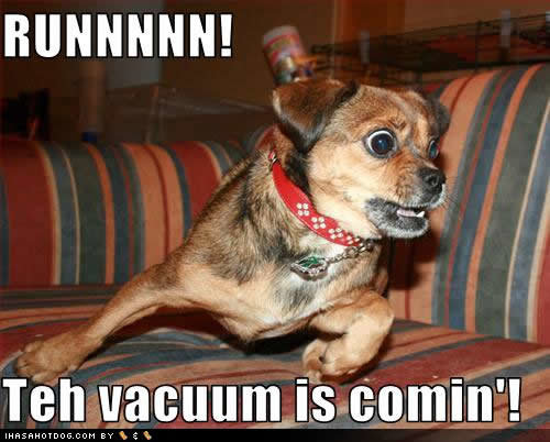 funny dog pictures runnnnn vacuum