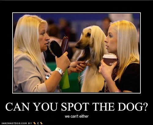 funny dog pictures spot dog