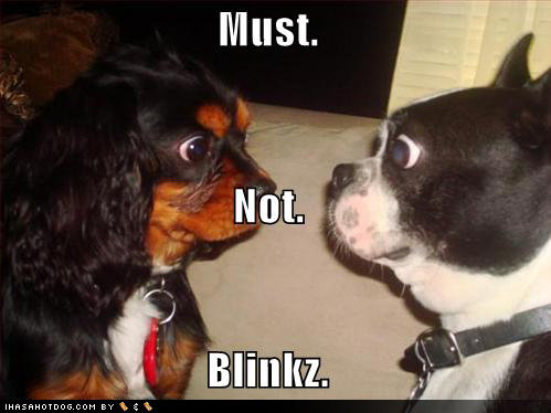 funny dog pictures staring contest