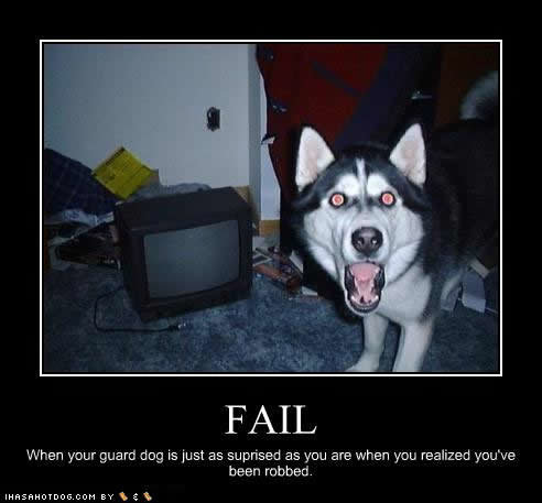 funny dog pictures surprised robbed