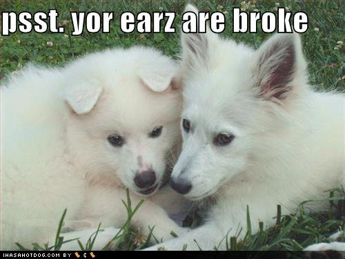funny dog pictures white broken ears grass