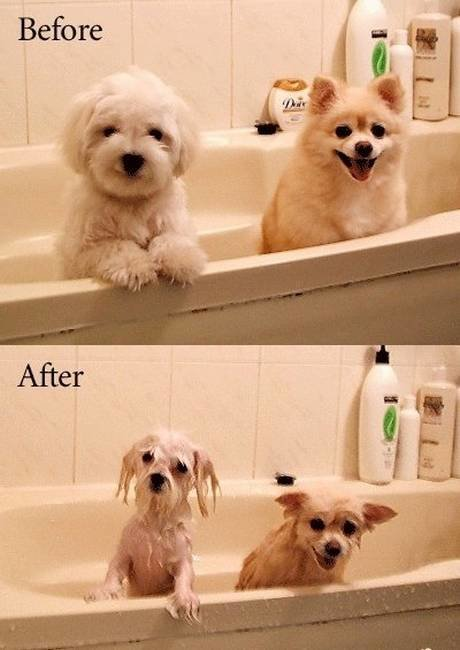 funny dogs before after bath