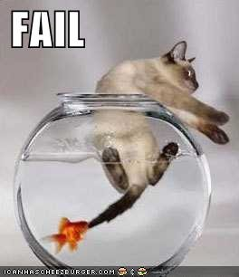 funny picture cat fail