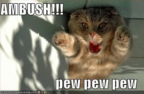 funny pictures ambush cat