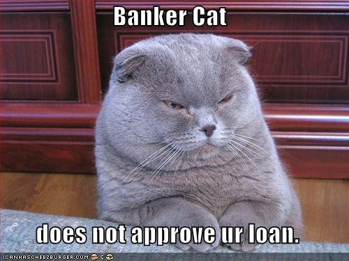 funny pictures banker cat