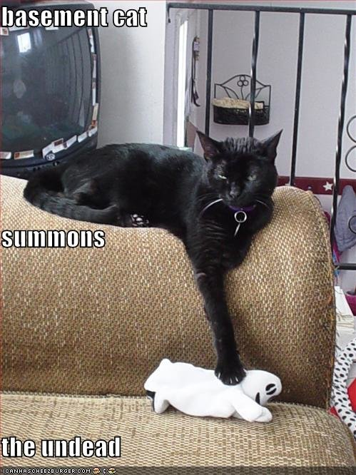 funny pictures basement cat summons undead