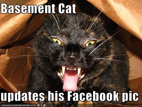 funny pictures basement cat updates facebook pic