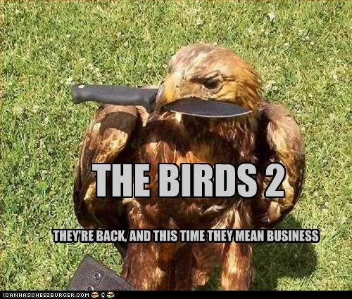 funny pictures bird means business