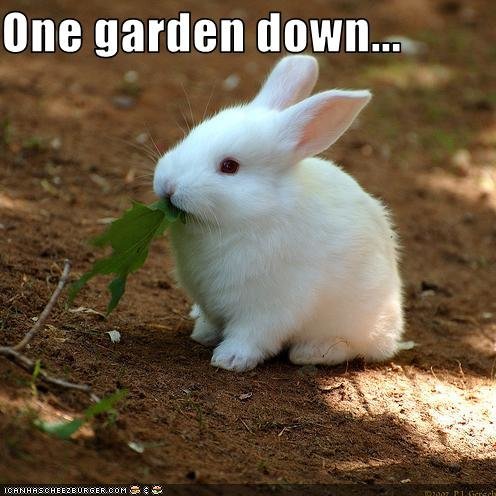 funny pictures bunny eats gardens