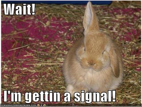 funny pictures bunny rabbit antennae