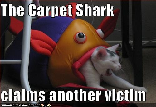 funny pictures carpet shark claimed another victim