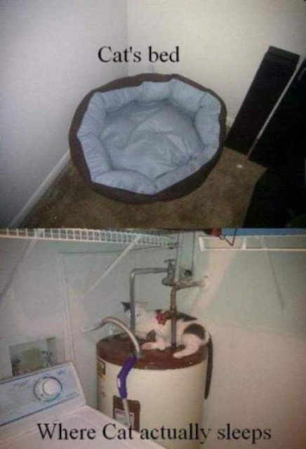 funny pictures cat bed