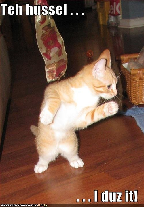 funny pictures cat dances hussle