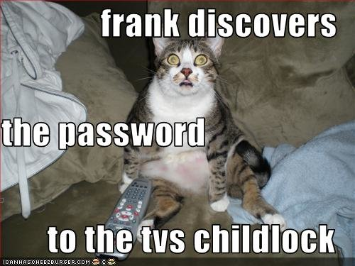 funny pictures cat discovers password