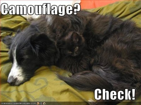 funny pictures cat dog camouflage