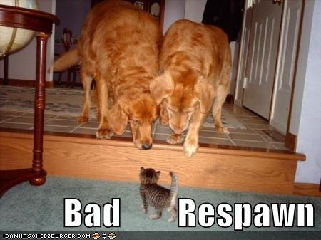funny pictures cat dogs