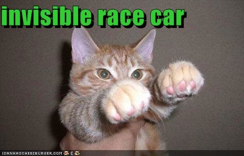 funny pictures cat drives invisible racecar