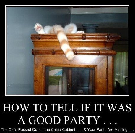 funny pictures cat good party