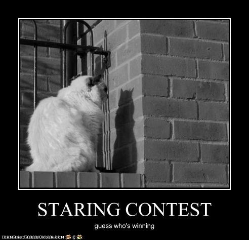 funny pictures cat contest his shadow