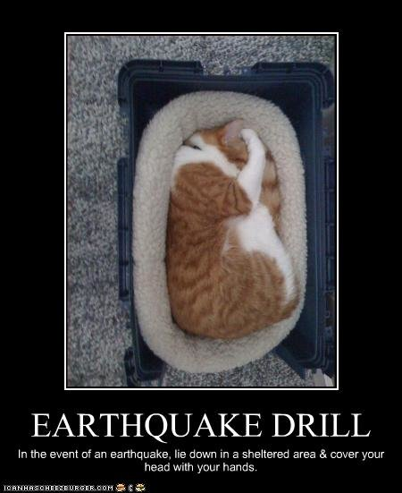 funny pictures cat earthquake drill
