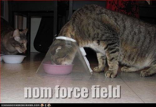 funny pictures cat force field cats