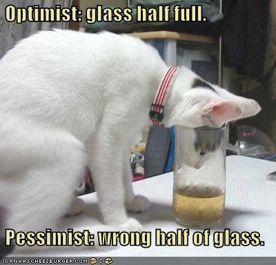 funny pictures cat half full glass