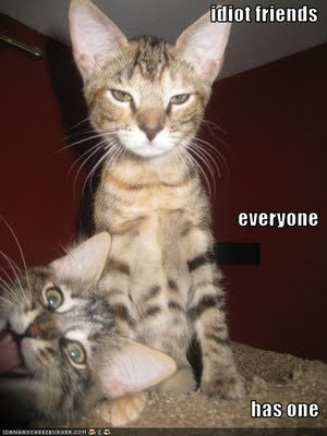 funny pictures cat idiot friend