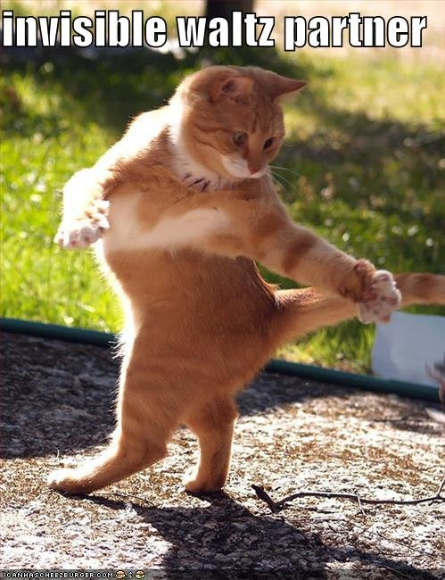funny pictures cat invisible waltz partner