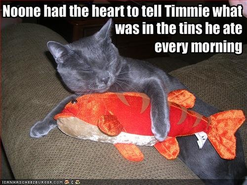 funny pictures cat tuna shaped stuffed animal