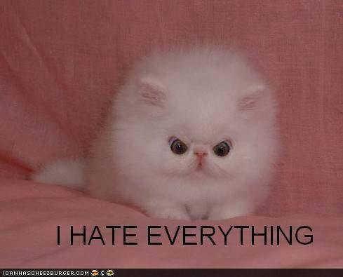 funny pictures cat hates everything